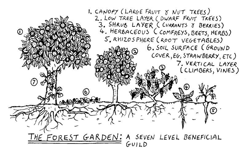 "The forest garden, or ""food forest"", is the ultimate example of companion planting"